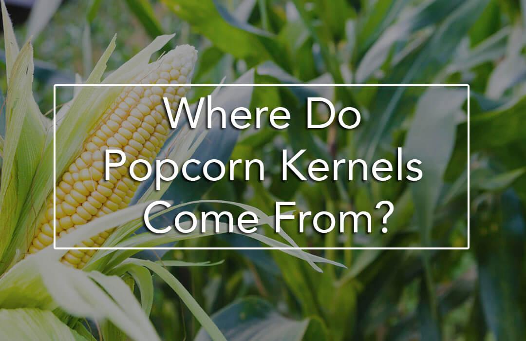 popcorn-corn-plant